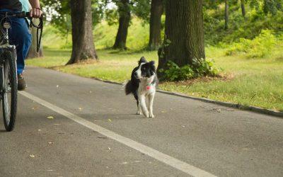 Radfahrer und Hunde